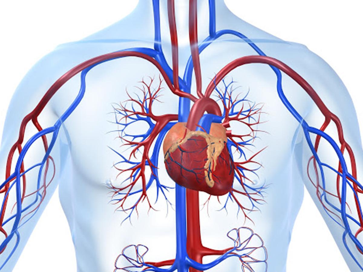 Khoa ngoại mạch máu